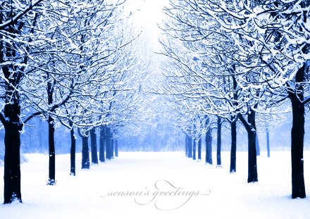 Winter's Path Holiday Cards